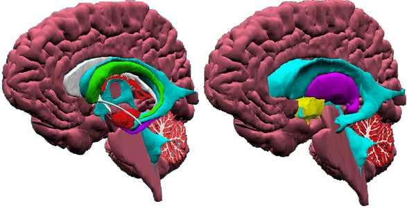 El cerebro como parte fundamental en las relaciones de pareja - Nerea Rodriguez C
